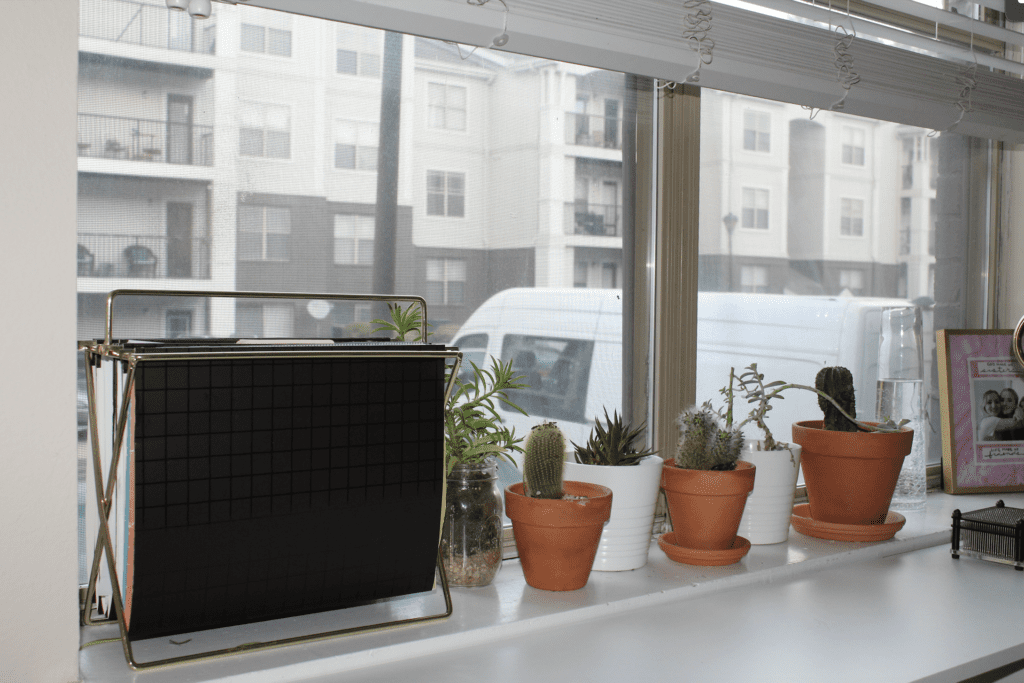 cacti and succulents on window shelf next to filing system